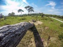 Горизонтальное дерево Стоковое Фото