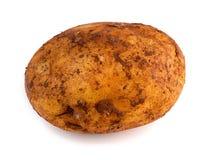 Горизонтальный взгляд свеже выбранной изолированной картошки russet Стоковое Изображение RF