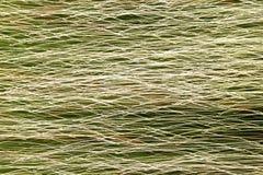 Горизонтальный свет золота Стоковая Фотография RF