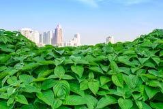 Горизонт города над зелеными листьями Стоковая Фотография RF