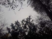 Горизонт деревьев стоковые фотографии rf