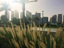 Горизонт Дохи на парке Sheraton в Дохе Стоковые Изображения RF