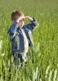 горизонт мальчика смотря молода Стоковые Фото