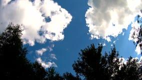 Горизонт с деревьями и травой на переднем плане акции видеоматериалы