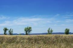 Горизонт с деревьями Стоковые Фотографии RF
