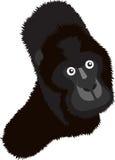 горилла Стоковое Изображение RF