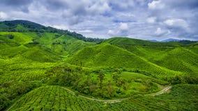 Гористая местность Камеруна фермы чая стоковые изображения rf