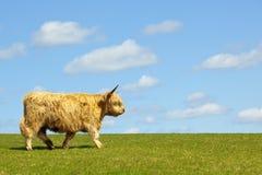 гористая местность коровы Стоковое Изображение
