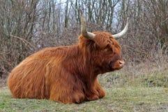 гористая местность коровы Стоковые Изображения