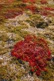 Гористая местность осени засаживает предпосылку в Норвегии Gamle Strynefjellsve Стоковая Фотография