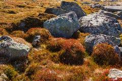 Гористая местность осени засаживает предпосылку в Норвегии Gamle Strynefjellsve Стоковое Изображение RF