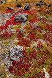Гористая местность осени засаживает предпосылку в Норвегии Gamle Strynefjellsve Стоковые Фото