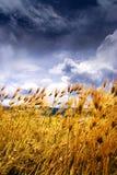 гористая местность ячменя Стоковое Изображение RF
