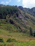 гористая местность altai отслеживает древесину Стоковое фото RF
