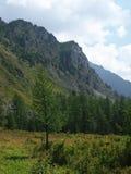 гористая местность altai отслеживает древесину Стоковое Фото