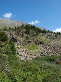 гористая местность altai отслеживает древесину Стоковое Изображение