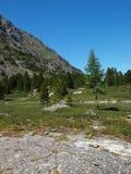 гористая местность altai отслеживает древесину Стоковые Фотографии RF