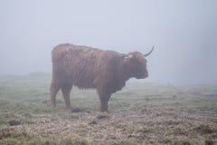 Гористая местность Bull Стоковое Изображение RF