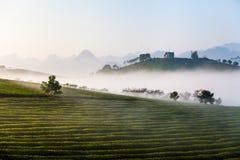 Гористая местность Mocchau, Вьетнам: Холм чая Moc Chau, деревня 25-ое октября 2015 Moc Chau Чай традиционное питье в Азии стоковое фото rf