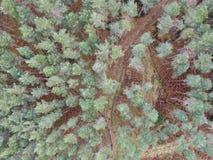Гористые местности воздушной съемки леса шотландские стоковые изображения rf