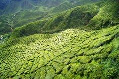 Гористые местности Камерона плантаций зеленого чая Стоковые Изображения RF