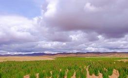 Гористые местности красного зеленого завода поля квиноа андийские, Боливия Стоковое Изображение RF