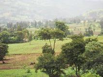 Гористые местности Boko Стоковые Фото
