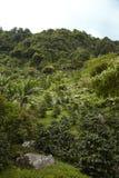Гористые местности, Boquete, Chiriqui, Panama4 Стоковое Фото