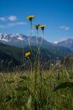 Гористые цветки Стоковые Изображения RF