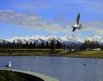 Горная цепь Chugach с чайками Стоковое Изображение