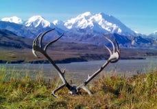 Горная цепь Denali с antlers карибу Стоковые Фотографии RF
