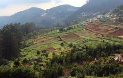 Горное село с полем плантации чая Стоковое Изображение RF