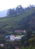 Горное село с полем чая Стоковые Фотографии RF