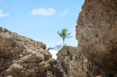 Горные породы выветренные силой морской воды Текстурированные утесы с ударом волн в Coqueirinho приставают к берегу, Joao Pessoa, Стоковые Изображения RF