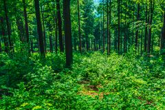 Горные склоны выгодной позиции покрытые с лесом и кустами Стоковая Фотография