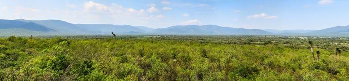 Горные склоны Guadalcazar, Мексики стоковая фотография rf