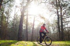 Горный велосипед катания велосипедиста на следе в красивом сосновом лесе под Солнцем Концепция приключения и перемещения Стоковое фото RF