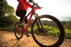 Горный велосипед катания женщины на следе леса Стоковое Изображение