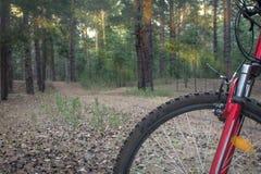 Горный велосипед готовый для того чтобы пойти на след в древесинах с восходом солнца Стоковое Изображение