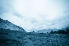 Горный вид от долины с сосновым лесом стоковое изображение rf