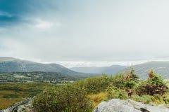 Горный вид от долины с сосновым лесом стоковые фото