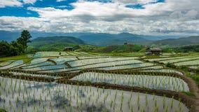 Горный вид поля неочищенных рисов коттеджа стоковое фото rf