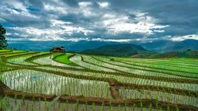 Горный вид поля риса коттеджа стоковые фотографии rf