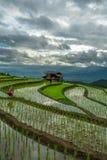 Горный вид поля риса коттеджа стоковые фото
