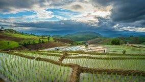 Горный вид поля риса коттеджа стоковая фотография rf