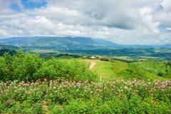 Горный вид с цветочным садом на горной вершине Стоковые Изображения RF