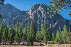 Горный вид в национальном лесе секвойи Стоковое Изображение RF