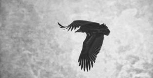 Горный пик голубого неба хищников витать муха свободно стоковые изображения rf