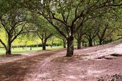 горный склон вишни Стоковые Изображения RF