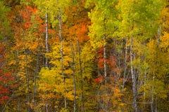 горный склон Минесота октябрь детали стоковое изображение rf